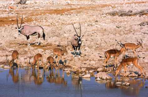Point d'eau d'Okaukuejo, Parc national d'Etosha - Namibie -