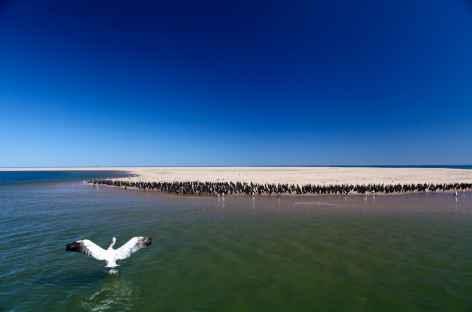 Colonie d'otaries à Walvis Bay - Namibie -