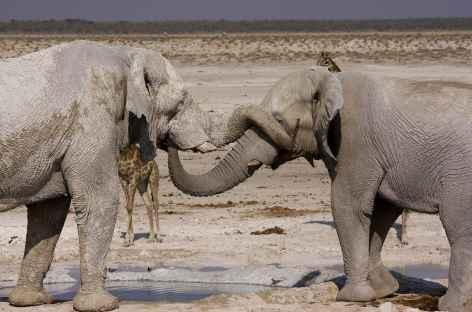 Éléphants dans Etosha - Namibie -