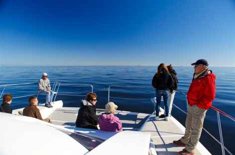 Sortie en bateau dans la lagune de Walvis Bay - Namibie -