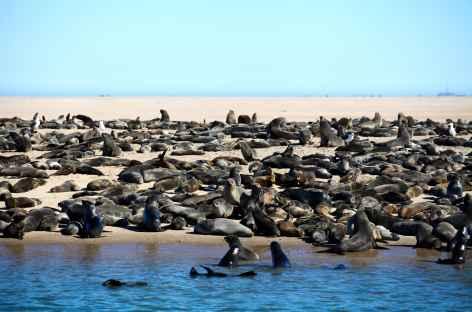 Colonies d'otaries à Walvis Bay - Namibie -