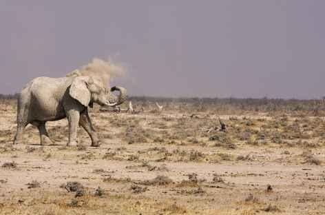 Eléphant, Parc national d'Etosha - Namibie -