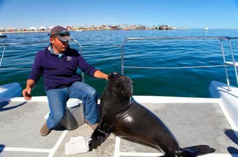 Une otarie s'invite à bord - Namibie -