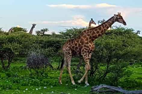 Parc national d'Etosha -