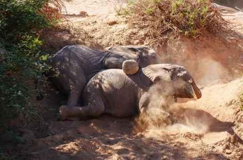 Elephanteaux du désert -