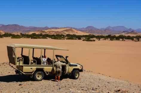 sur la piste des éléphants du désert -