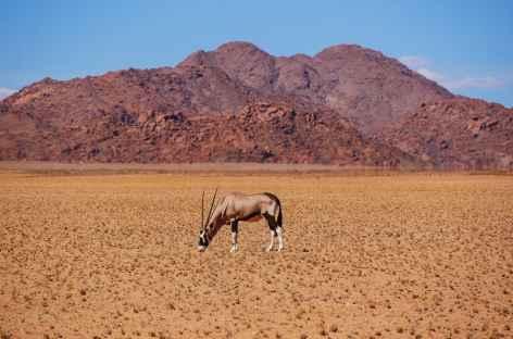 Oryx dans le parc de Sossusvlei -