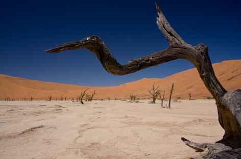 Dépression de Deadvlei - Namibie -