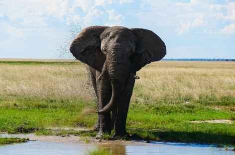 Elephant à Etosha - Namibie -