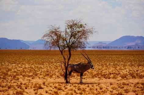 Oryx - Namibie -