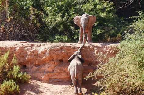 Elephanteaux du désert - Namibie -