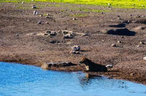 Hyènes à Etosha - Namibie -