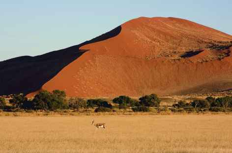 Dunes à Sossusvlei - Namibie -