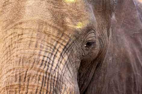 Eléphant, parc d'Etosha - Namibie -