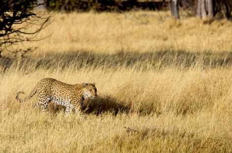 Lépoard à Chobe - Botswana -