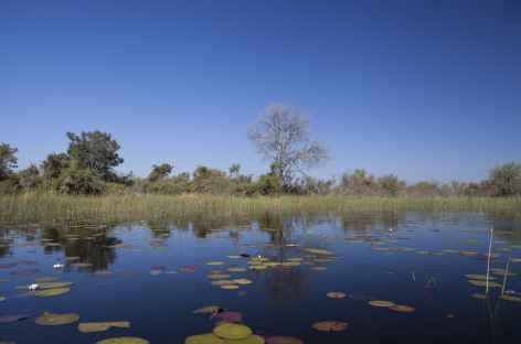 Delta de l'Okavango - Botswana -