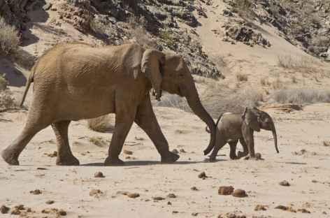 Eléphante du désert et son petit - Namibie -