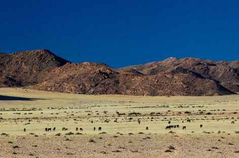 Chevaux sauvages de Garub - Namibie -