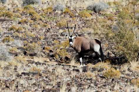 Oryx dans les environs du Fish River Canyon - Namibie -