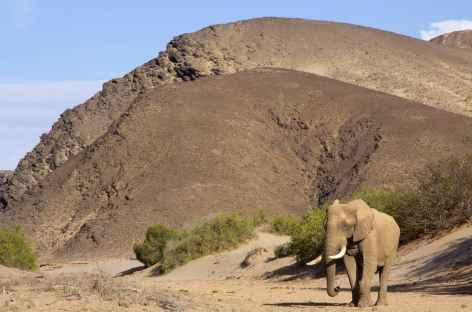 Eléphant du désert dans le Hoanib, Kaokoland - Namibie -