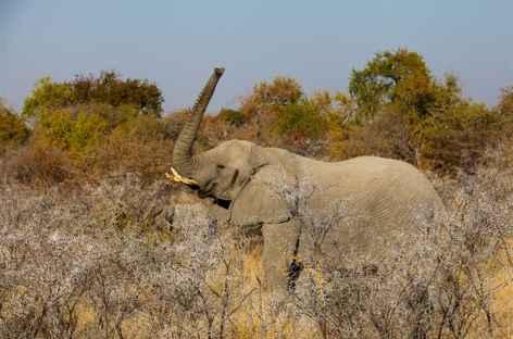 Eléphant à Etosha - Namibie -