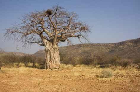 Baobab, région de Ruacana - Namibie -