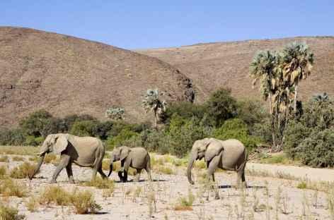 Région de Purros, éléphants du désert, Kaokoland - Namibie -