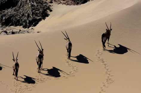 Oryx, Kaokoland - Namibie -