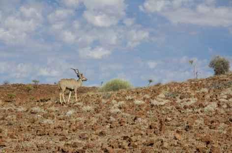 Koudou dans la région du Damaraland, vers Palmwag - Namibie -
