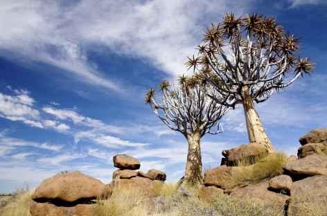 Forêt de kokerboom - Namibie -