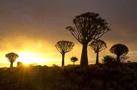 Forêt de kokerboom au coucher du soleil - Namibie -