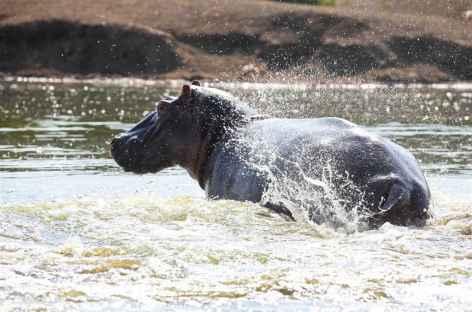 Hippopotame, Kazinga Channel, parc de Queen Elisabeth - Ouganda -