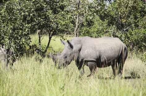 Pistage des rhinocéros blancs, Ziwa Rhino Sanctuary - Ouganda -