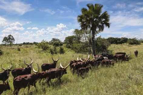 Au bord de la route ente Kampala et la Réserve de Ziwa - Ouganda -