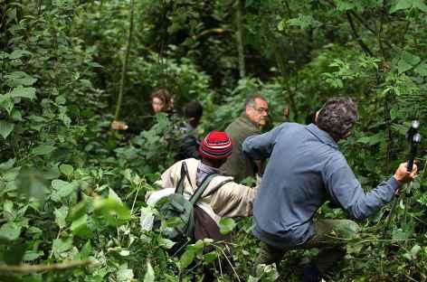 Pistage des gorilles de montagne - Ouganda -
