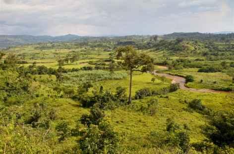 Au sud d'Ishasha - Ouganda -