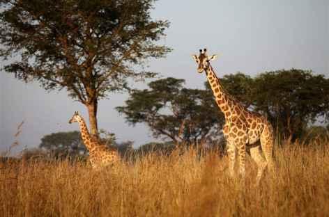 Safari dans le Parc national de Murchinson - Ouganda -
