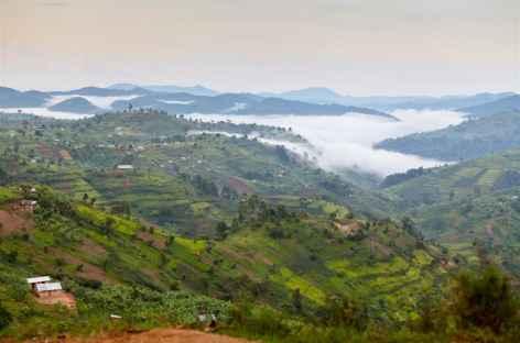 Au sud du parc de Queen Elisabeth, contreforts de la forêt de Bwindi - Ouganda -