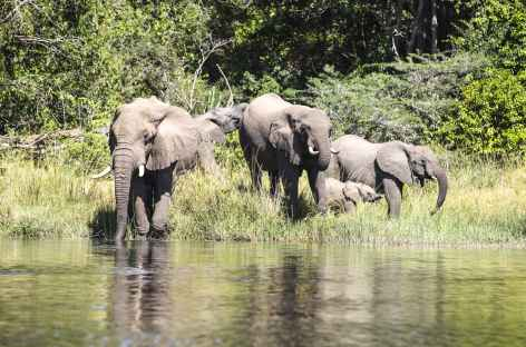 Observation des éléphants depuis notre bateau sur le Nil Victoria, Parc de Murchinson - Ouganda -