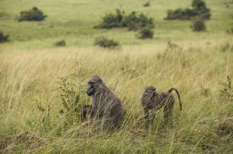 Safari dans le parc national de Queen Elisabeth - Ouganda -