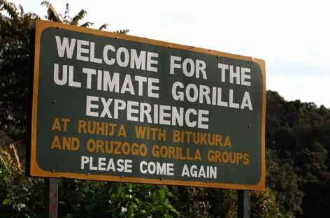 Gare aux gorilles !  Ouganda -