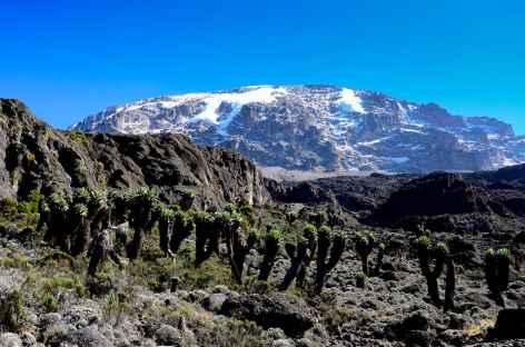 Etape entre Barranco et Barafu, Kilimanjaro - Tanzanie -