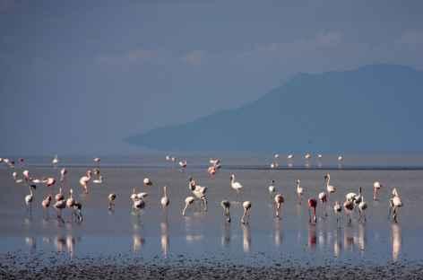 Flamants roses sur le lac Natron - Tanzanie -