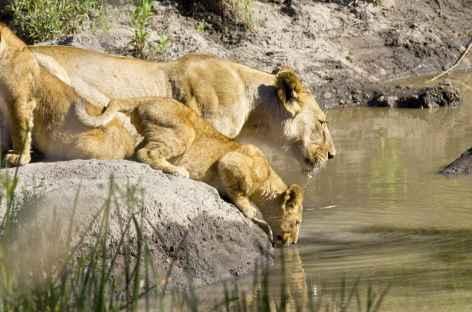 Lionne et son petit à Seronera, Serengeti - Tanzanie -