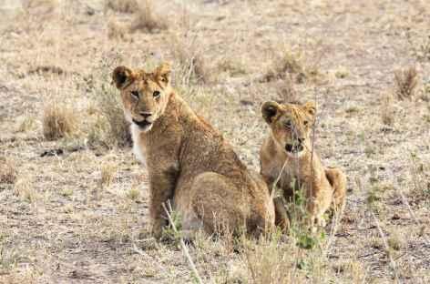 Lionne et son petit, parc du Serengeti - Tanzanie -