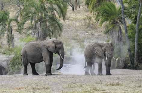 Éléphants proches de la rivière Seronera, parc du Serengeti - Tanzanie -