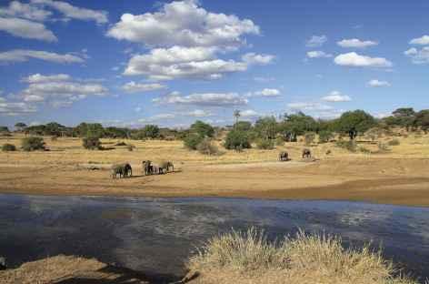 Éléphants proches de al rivière Seronera, parc du Serengeti - Tanzanie -
