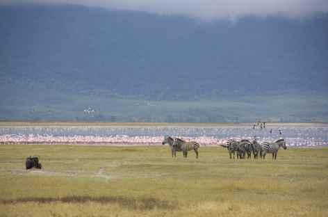 Dans la caldeira du Ngorongoro - Tanzanie -