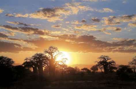 Coucher de soleil sur le baobabs, Parc national de Tarangire - Tanzanie -