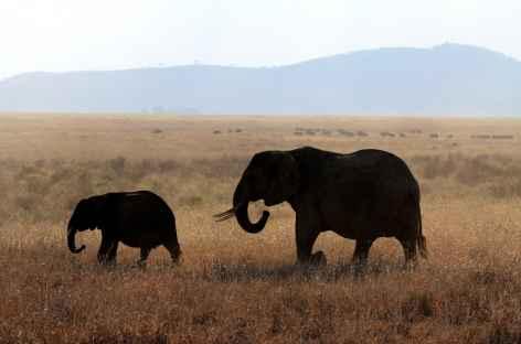 Eléphants dans le Parc national de Mikumi -